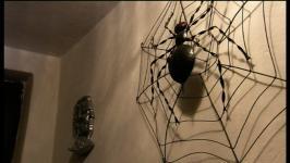 Domači pajek