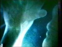 Rok Sieberer Kuri - Vivisekcija