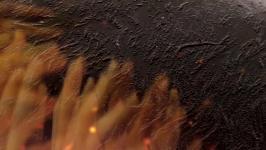 Nataša Prosenc Stearns - Tentacles / Feelers
