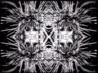 Alajbegović, Zemira (DJ Plasma) - Vortex