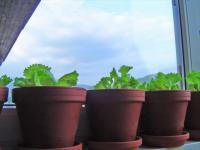 Vrtnarimo! / Let's Garden!