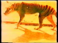 Damijan Kracina - Thylacinus Cynocephalus
