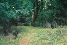 Dejan Habicht - Rotkäppchen