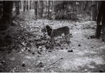 Habicht, Dejan - Rotkäppchen